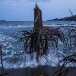 Pinos sacados desde su raíz por el tsunami que en 2011 ocurrió en Japón. Daniel Berehulak, Australia, Getty Images | 3er lugar en General News Stories